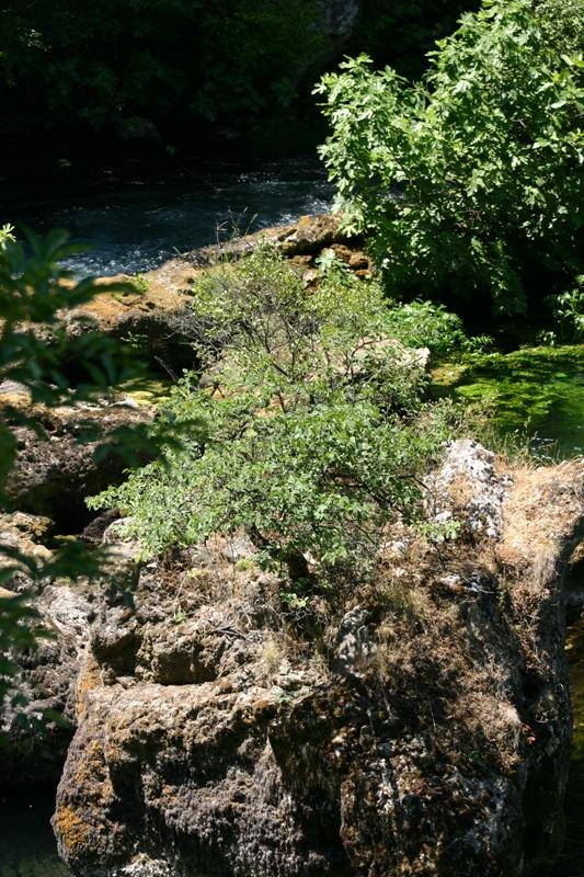 la source de Fontaine de Vaucluse