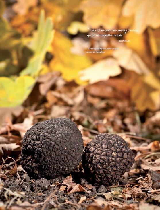 La truffe délicatesse Luberon Provence