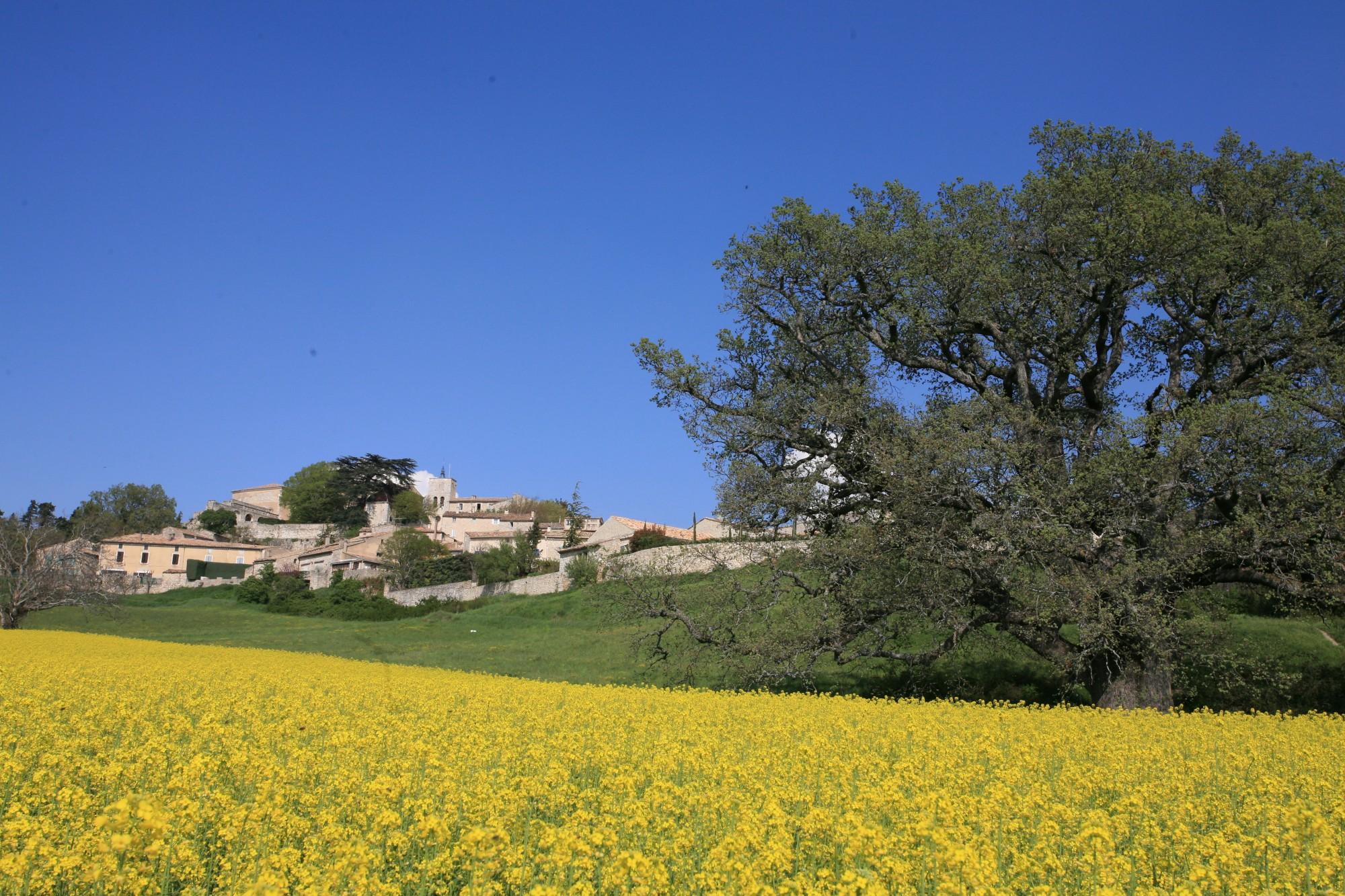 Le village perché de Murs et le grand chène