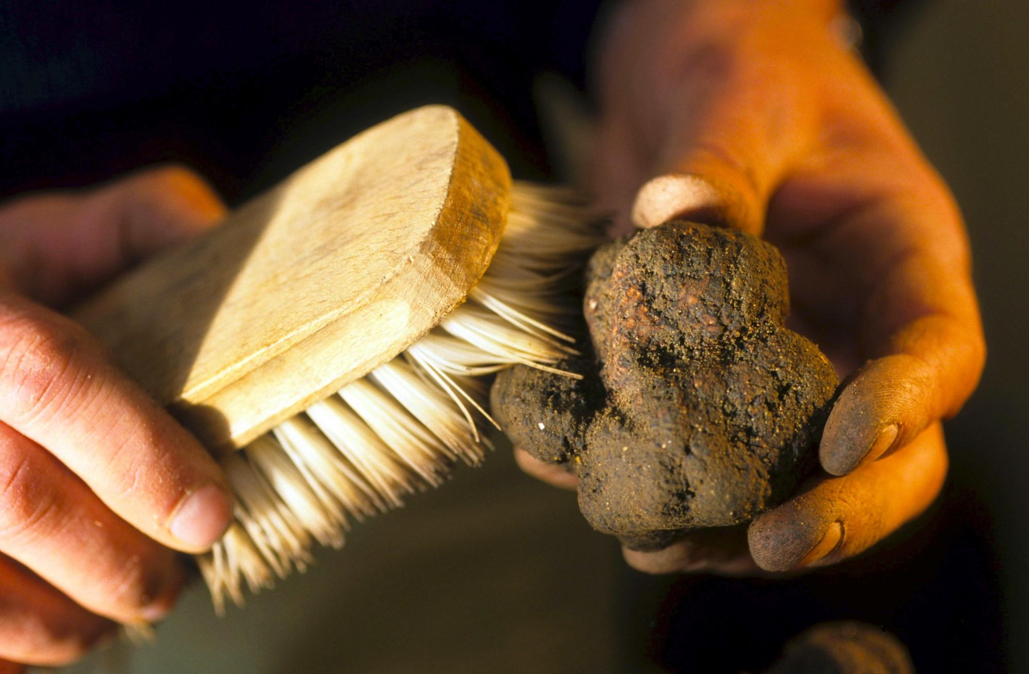 Netoyage d'une truffe