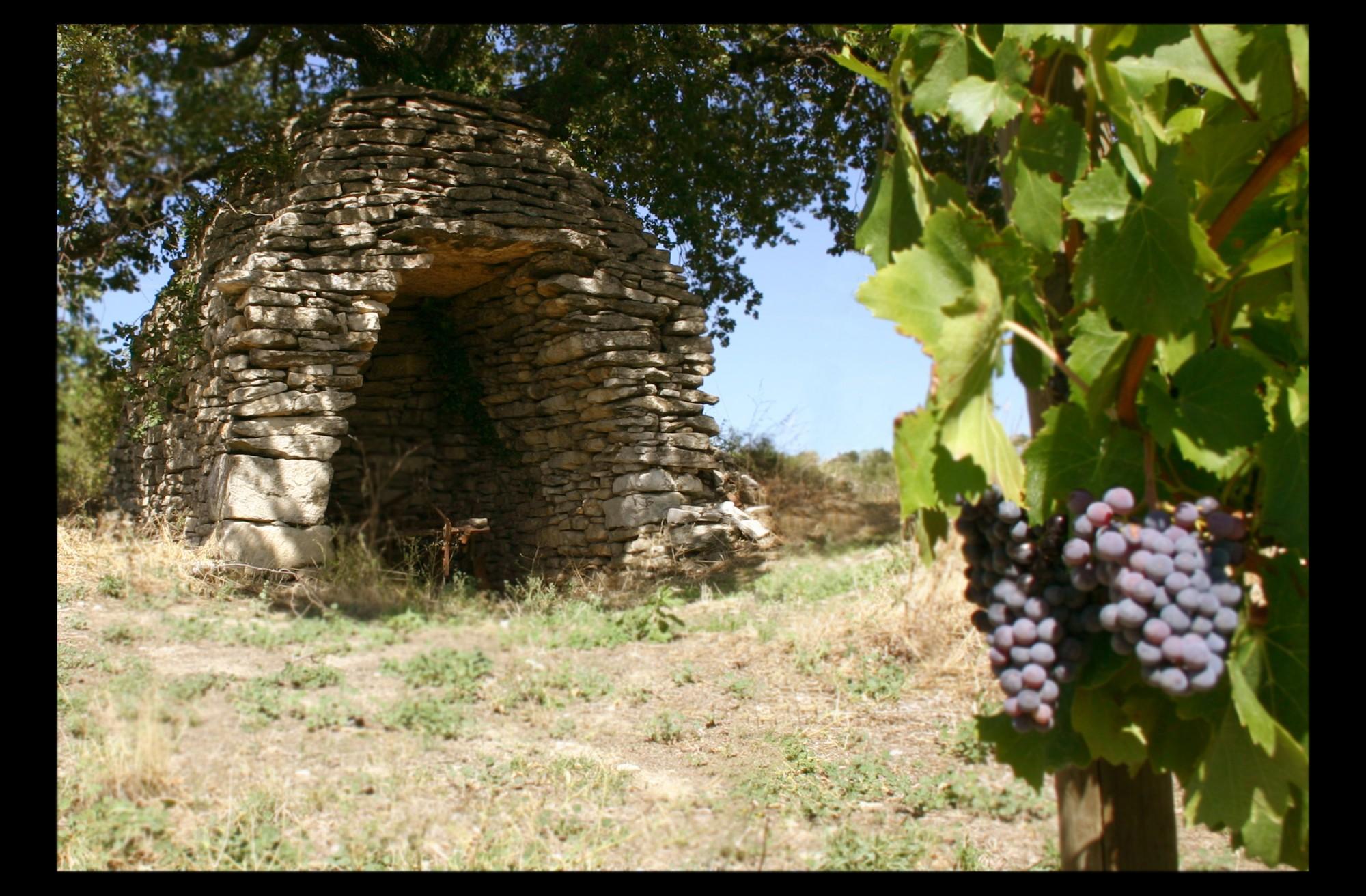Vigne et Borie