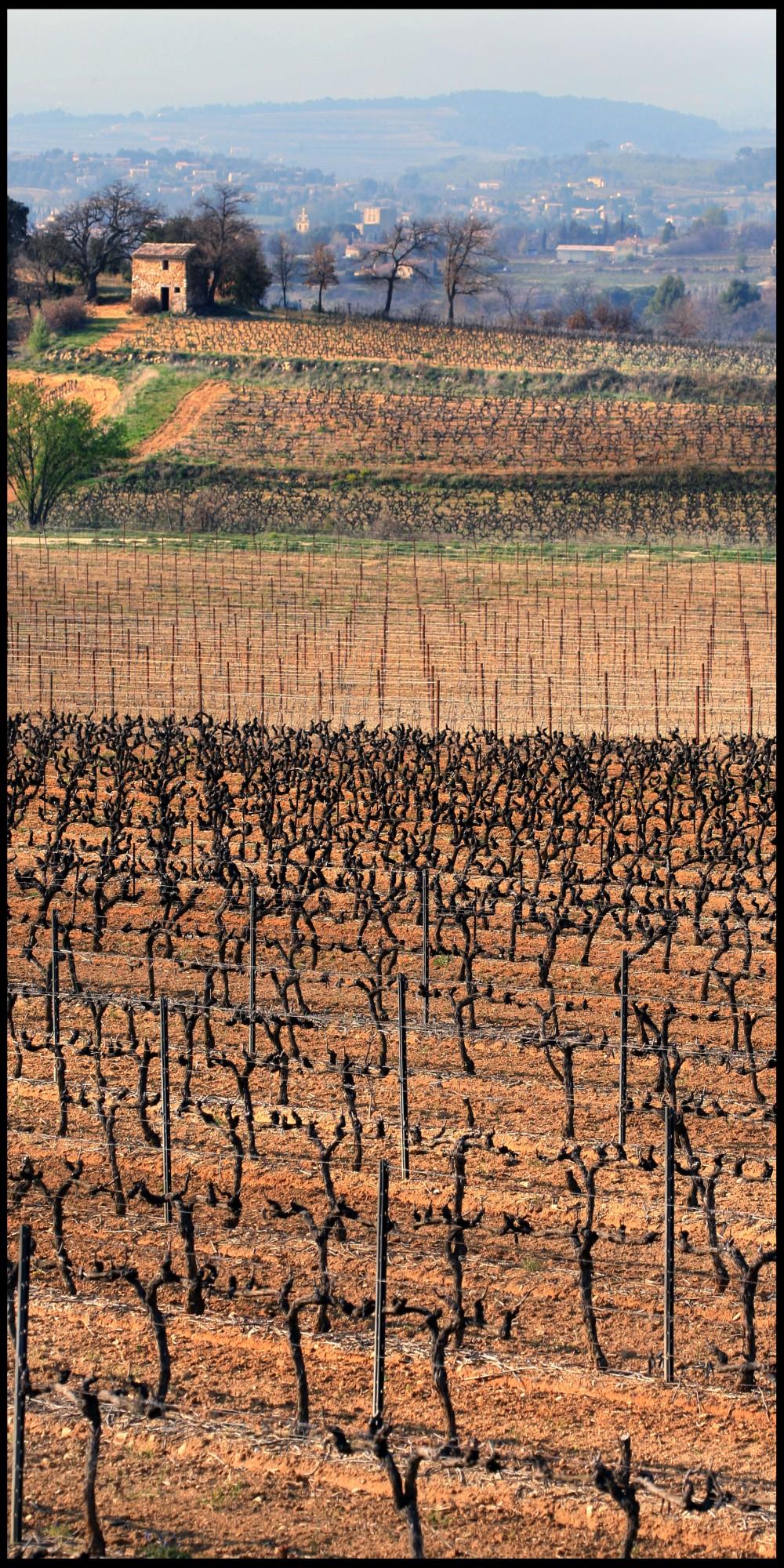 La vigne en sud Luberon