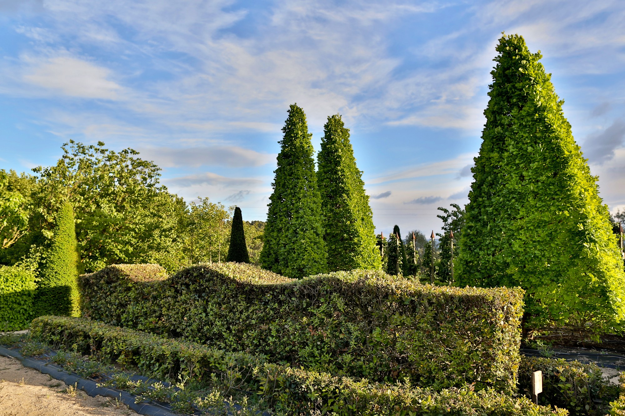 Les jardins du château de Val Joanis, sud Luberon