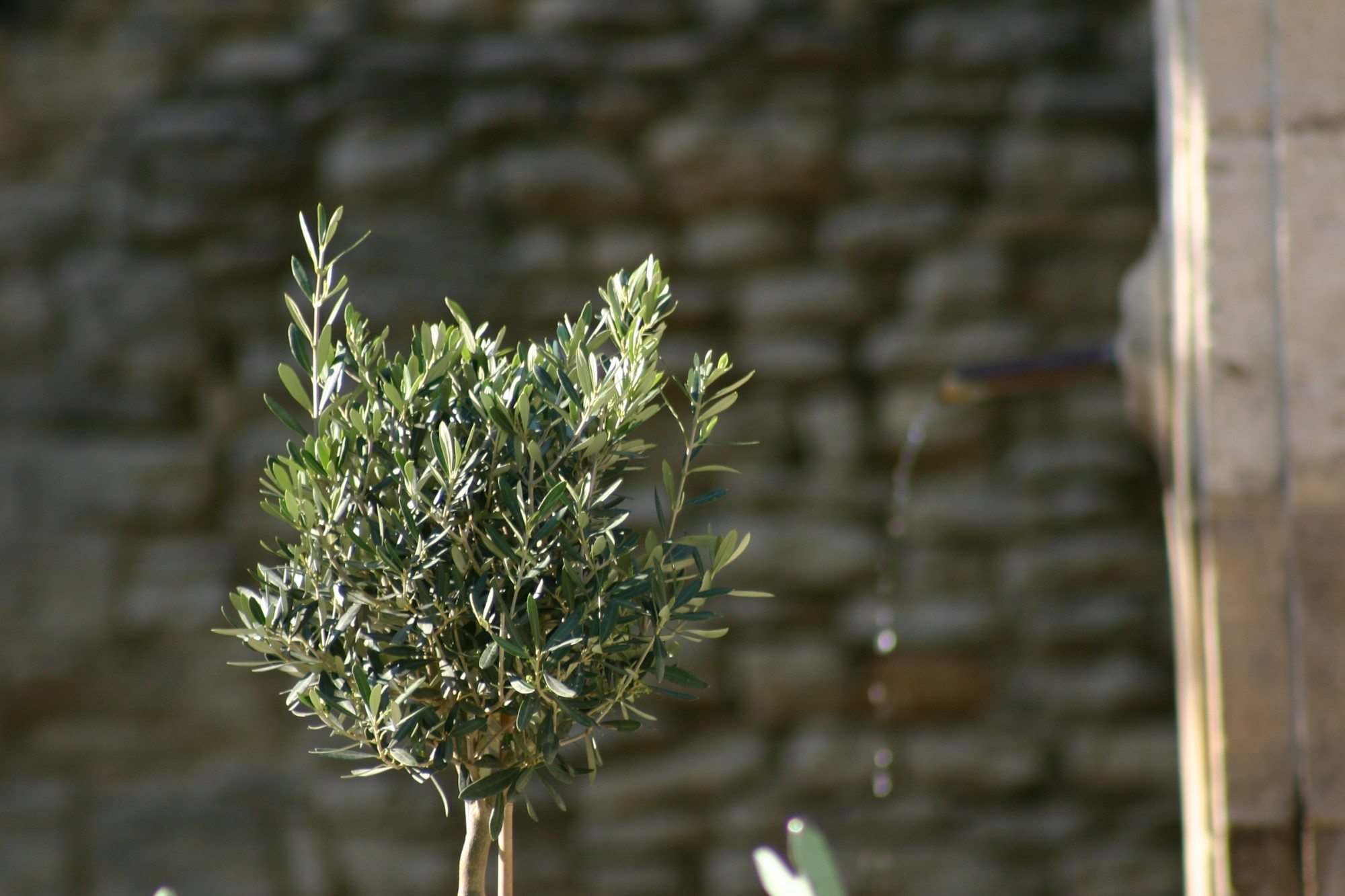 La pierre, l'eau et l'olivier, des symboles du triangle d'or du Luberon