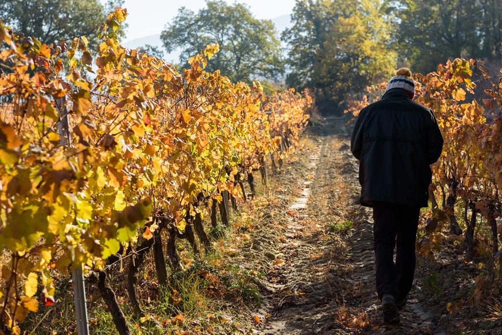 Le Domaine des Jeanne - Vin Rosé de qualité en Luberon