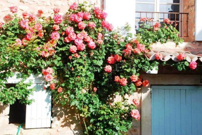 Mas ancien plein de charme en Luberon