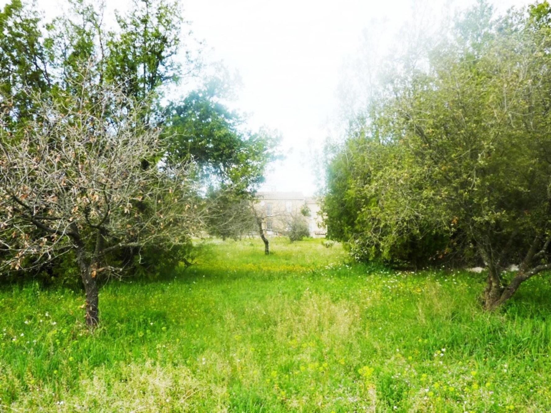 L'oliveraie du mas en Provence à vendre