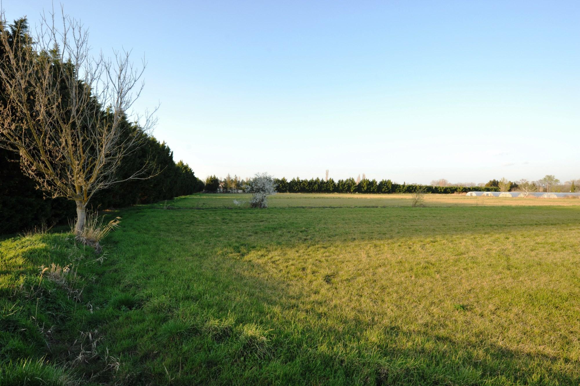 Un grand champ de le la propriété équestre des Alpilles