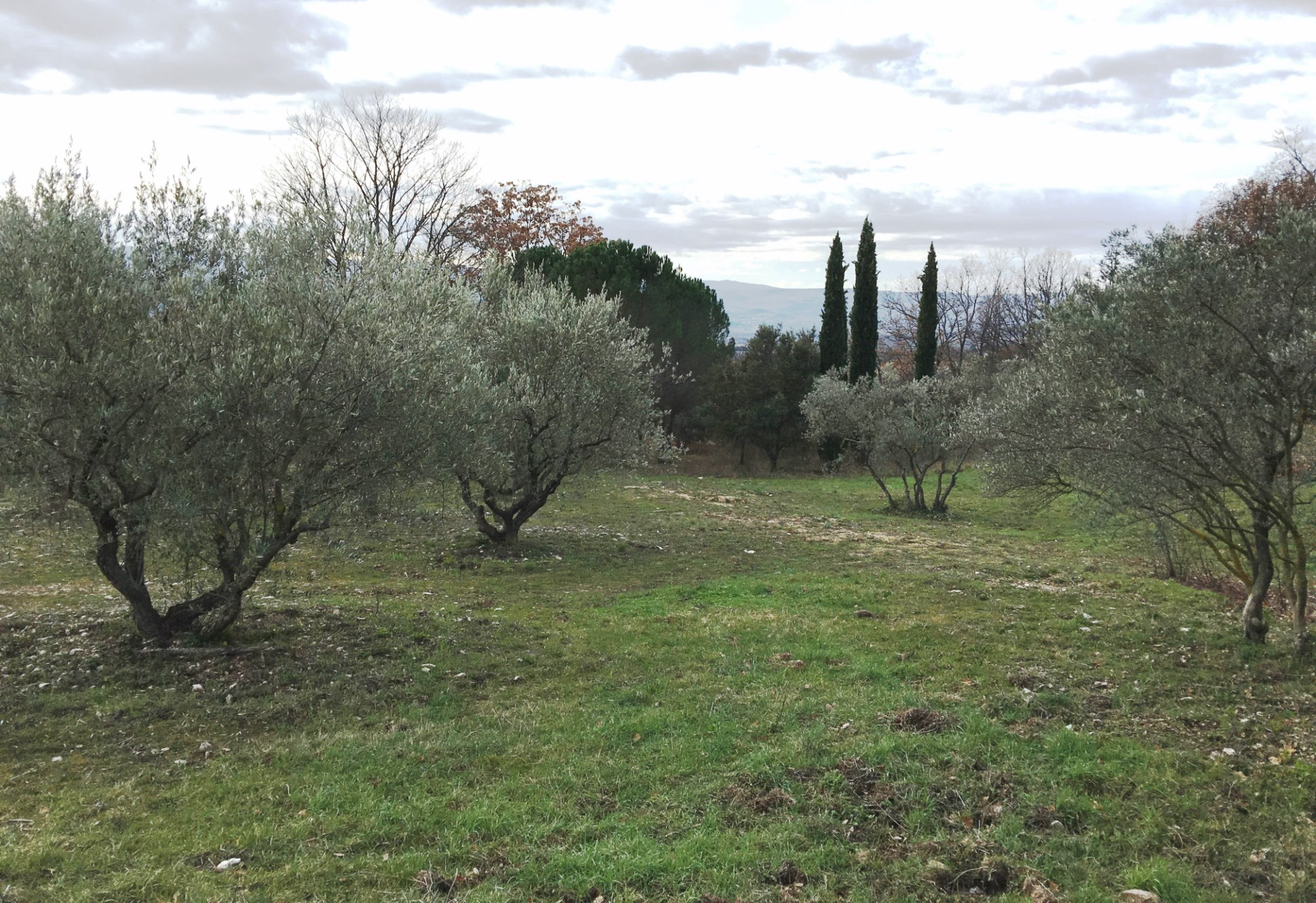 Terrain à bâtir à vendre en Luberon
