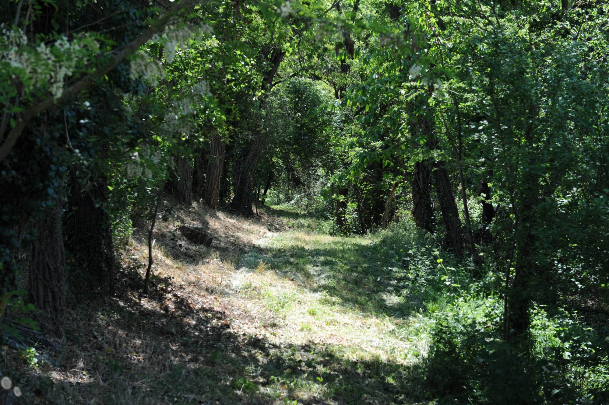 Belle ferme avec immenses dépendances à rénover sur 15 hectares au coeur du Luberon