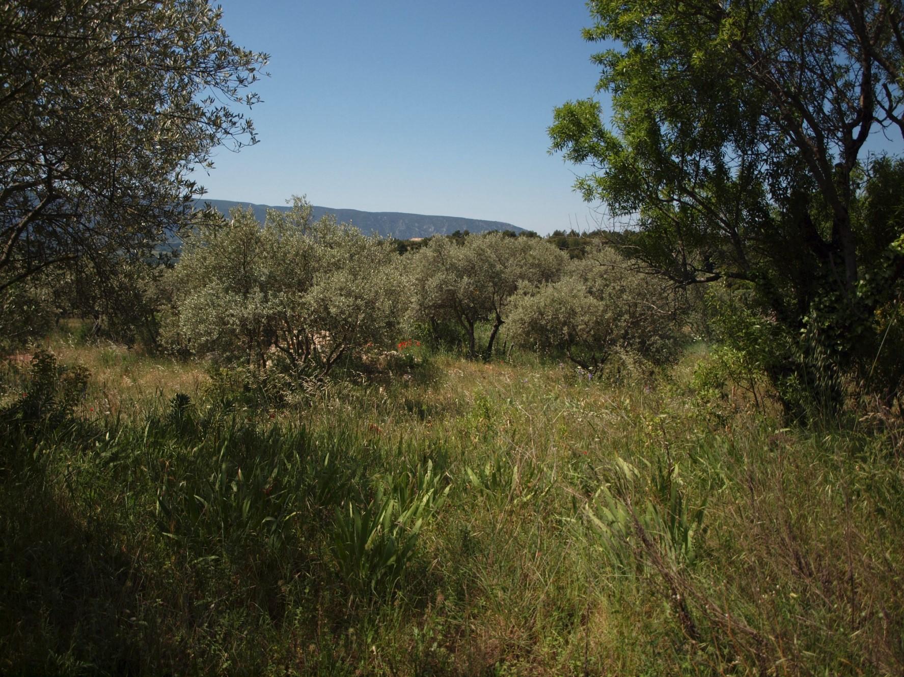 Beau terrain avec vue en Provence