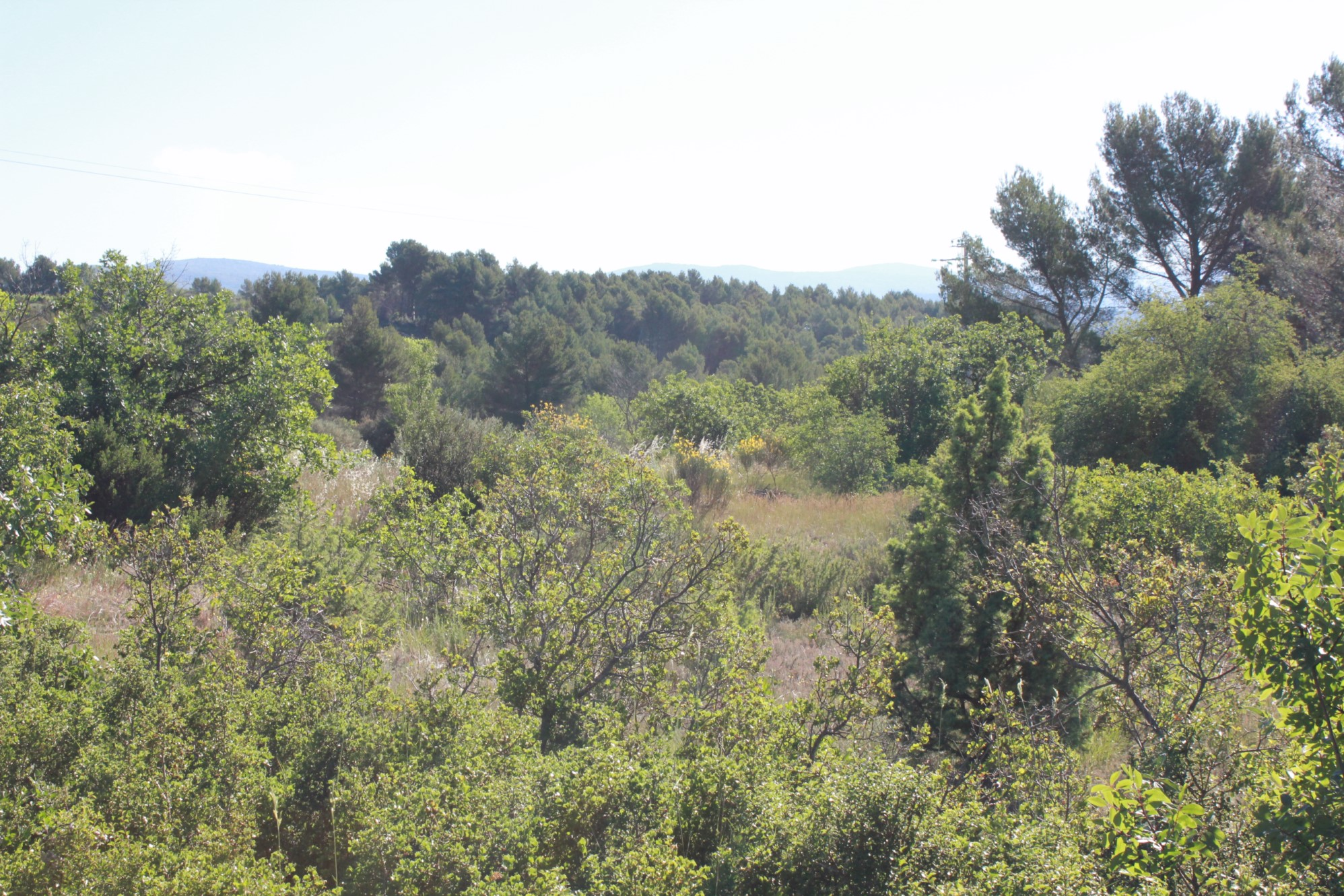 Beau terrain constructible à la vente en Provence