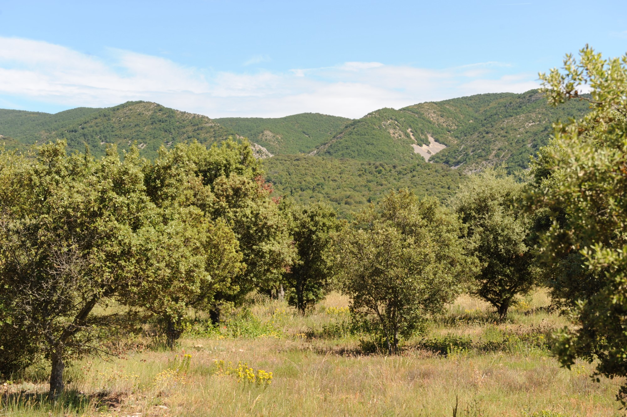 Property with view for sale in Provence
