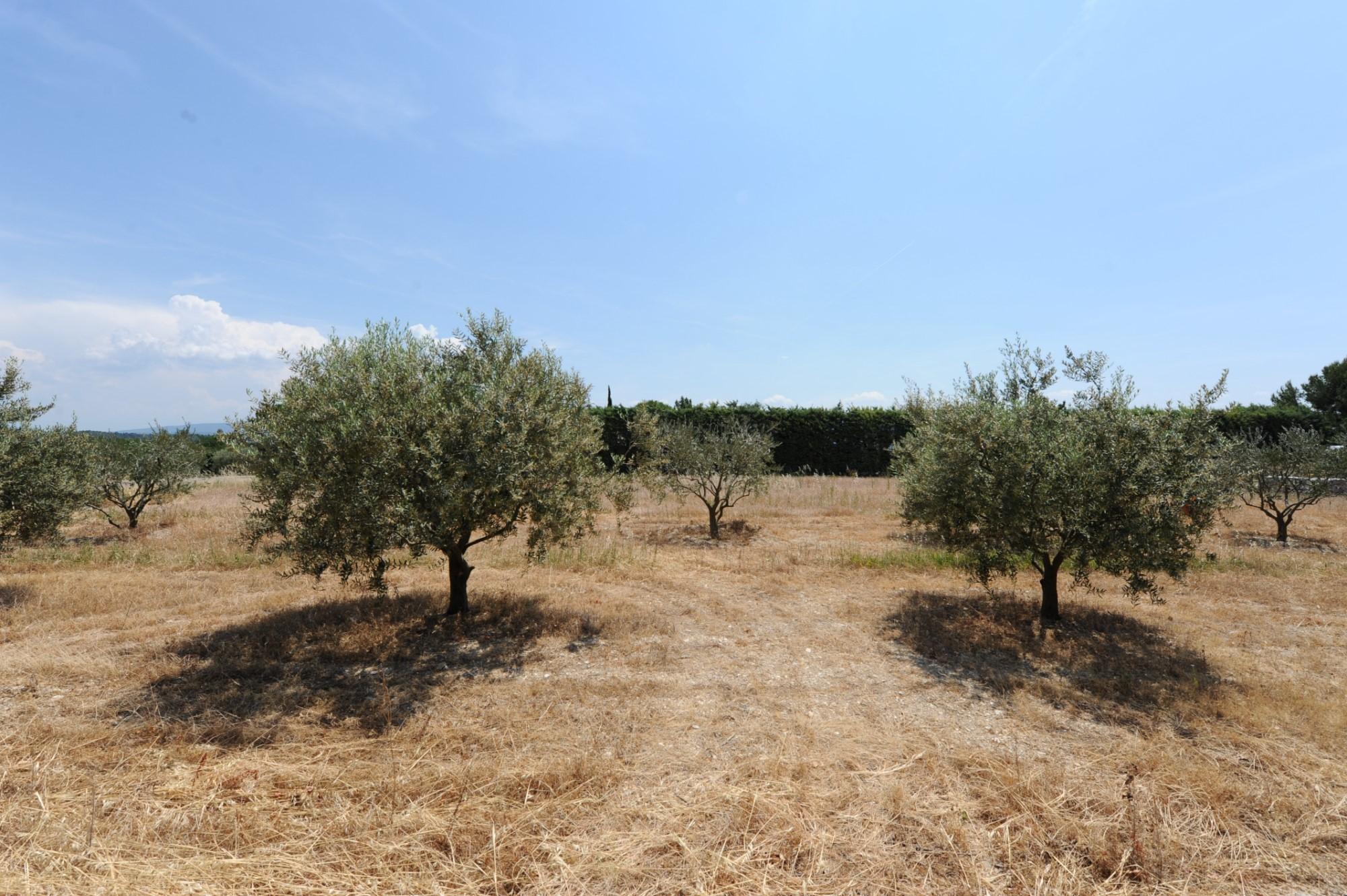 Terrain à bâtir à vendre en Provence