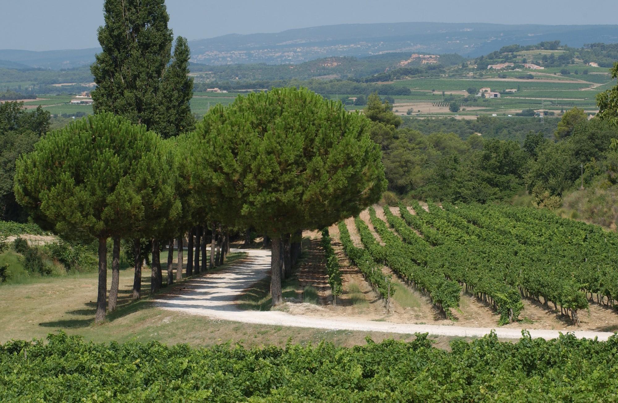 Propriété viticole en Provence