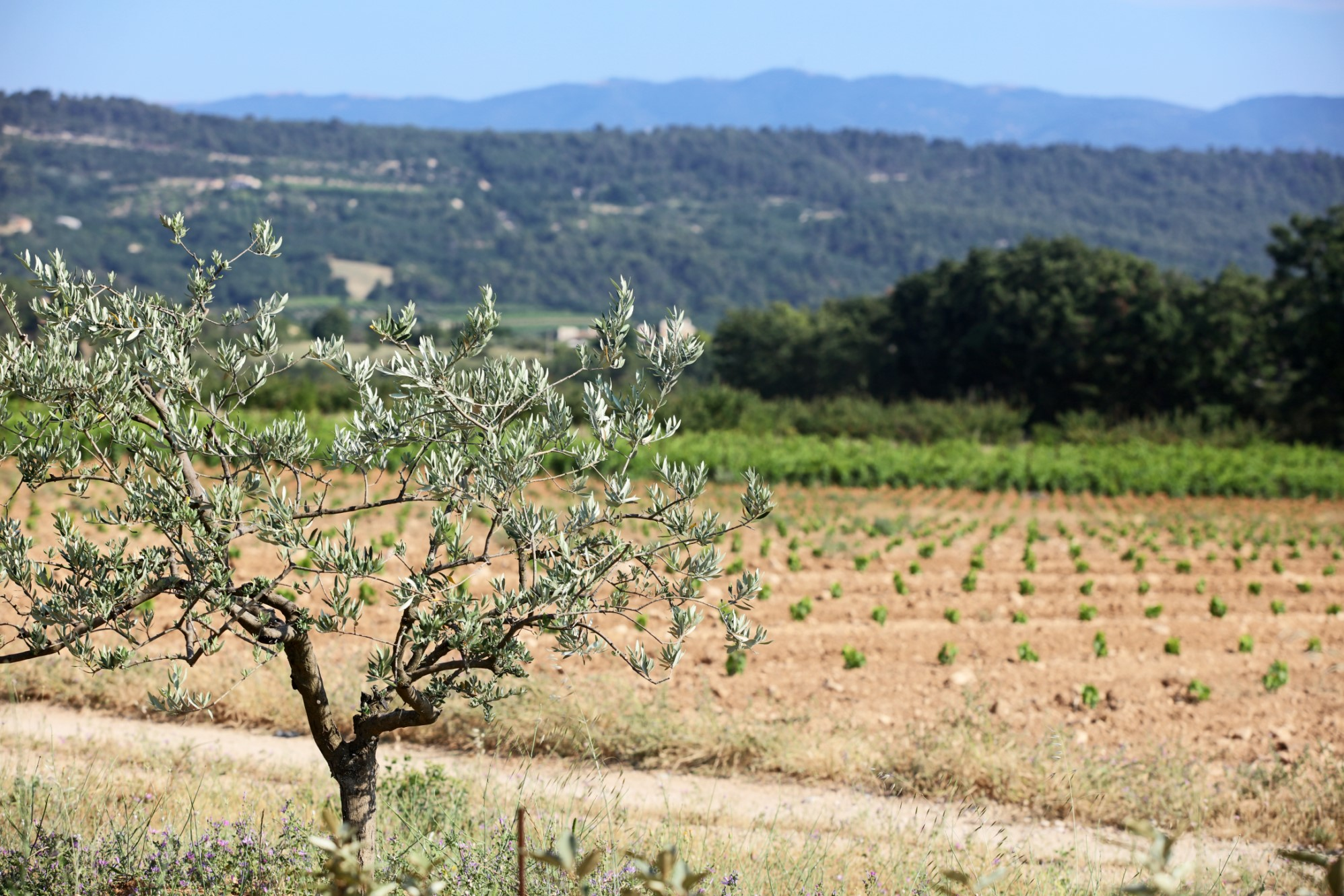 Propriété en Provence avec vue