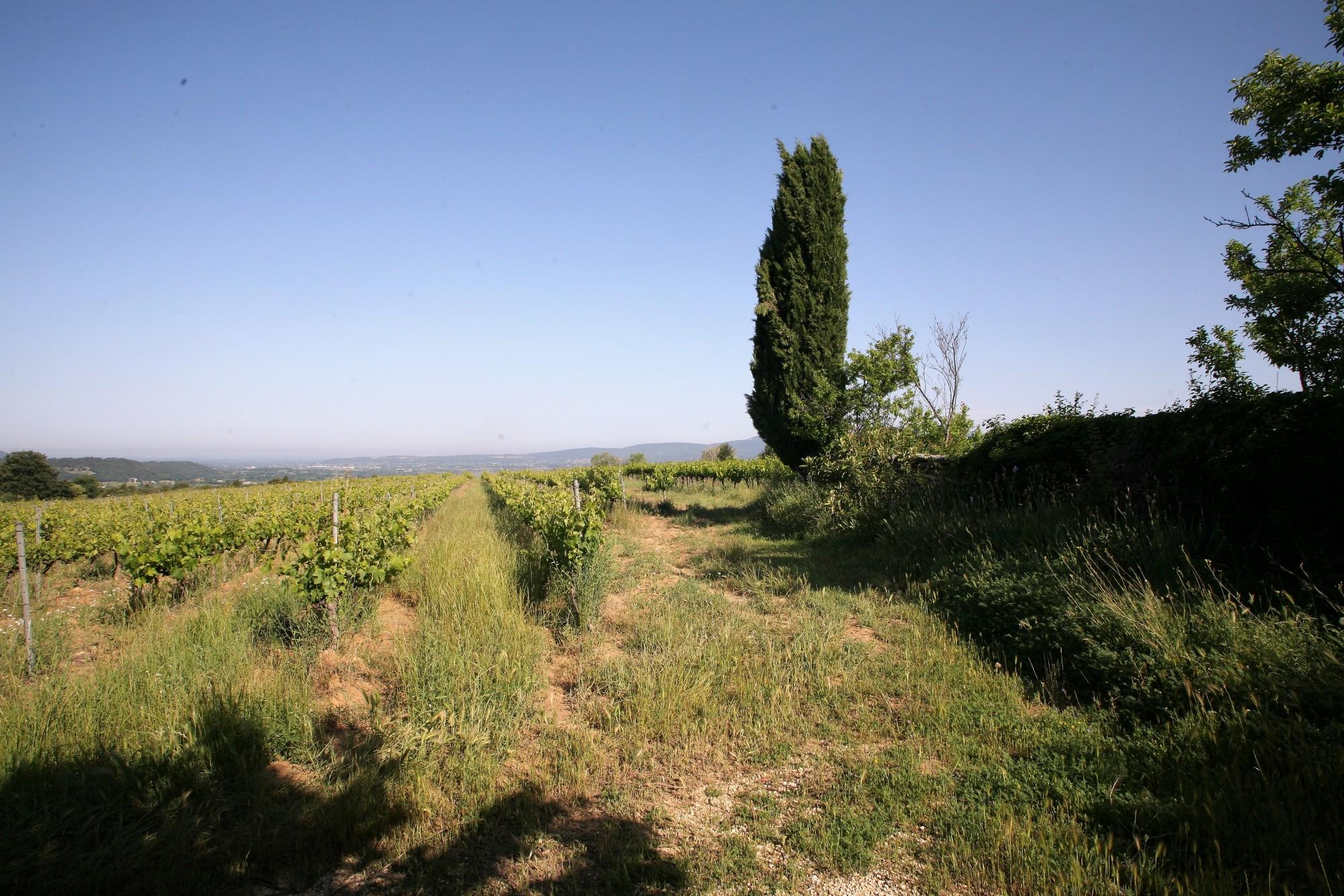 Luberon - Partie de mas à restaurer sur environ 1 hectare
