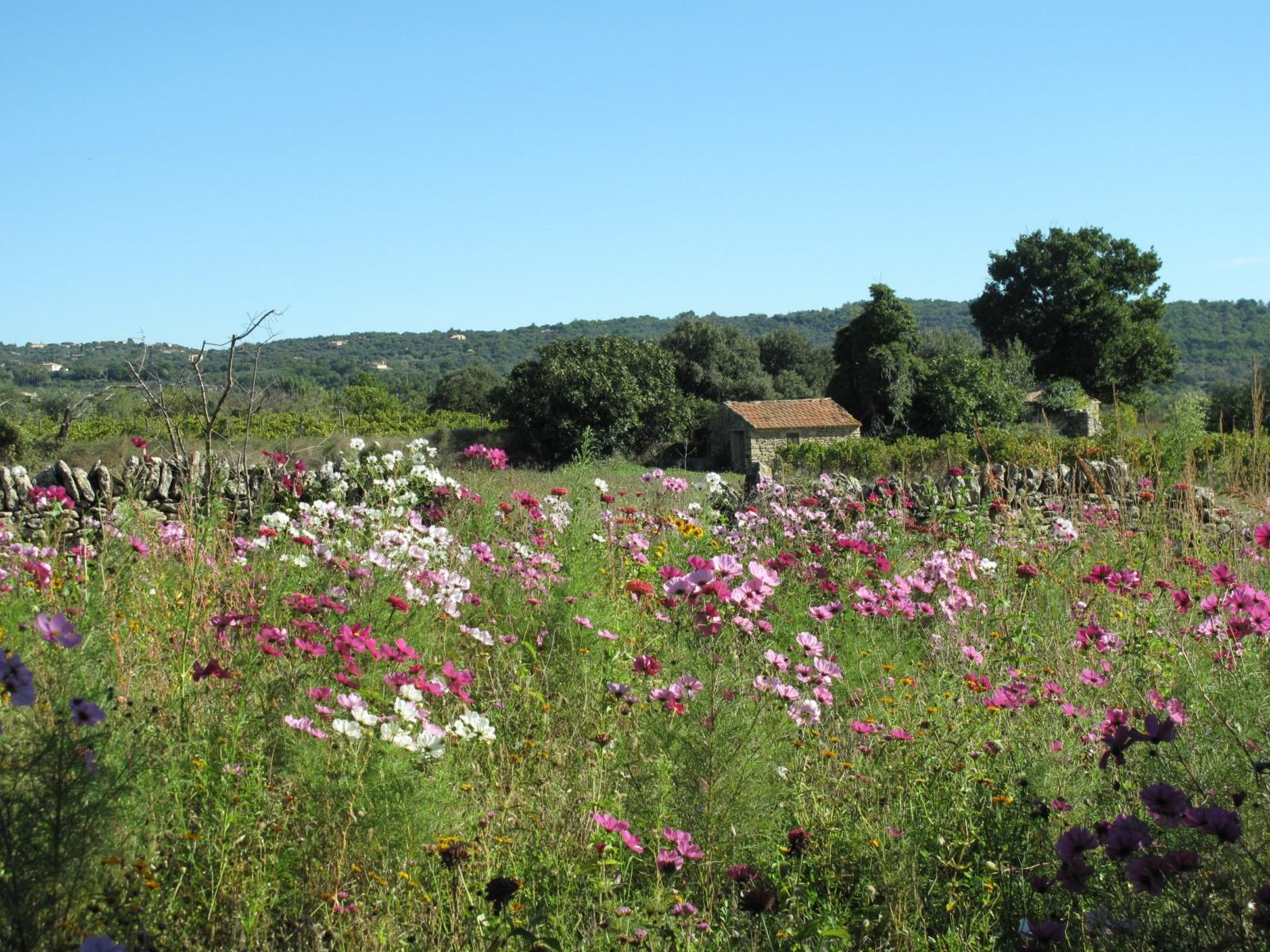 Proche de Cabrières d'Avignon, authentique village Provençal